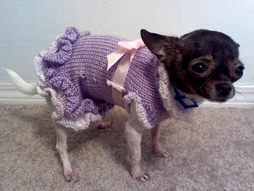 Ruffled Dog Sweater Dress (5)